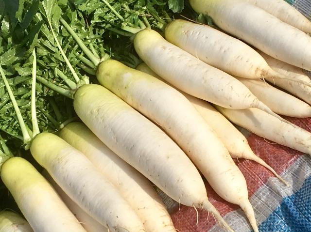 ヒルナンデス レシピ 3食材クッキング 大根 豆腐 生クリーム スザンヌ