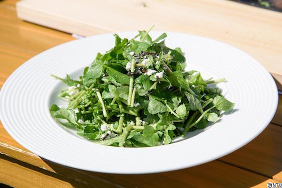 青空レストラン レシピ 作り方 10月13日 クレソン サラダ