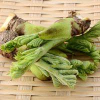 この差って何ですか 春の山菜 健康効果 タラの芽 糖尿病予防