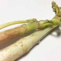 この差って何ですか 春の山菜 健康効果 ウド 疲労回復