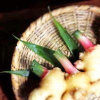 ヒルナンデス レシピ 作り置き 家政婦マコさん ポリ袋調理 新生姜 アレンジ
