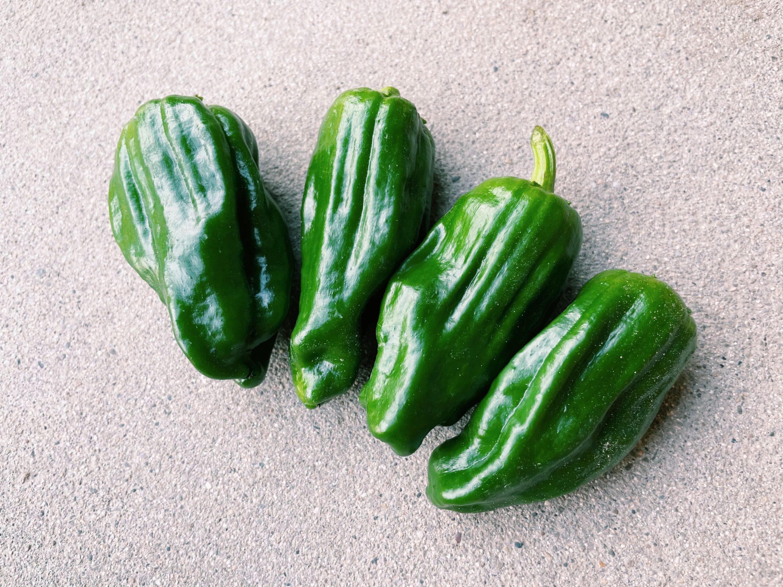 ヒルナンデス レシピ 作り方 ライバル食材徹底討論 ピーマン